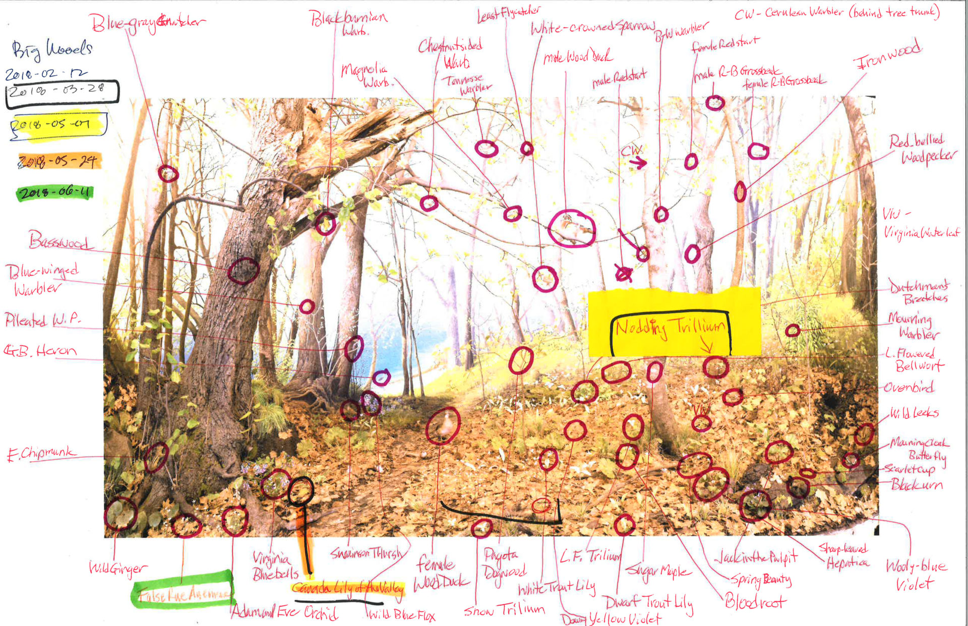 a diagram indicating where various flora and fauna of the big woods diorama should go