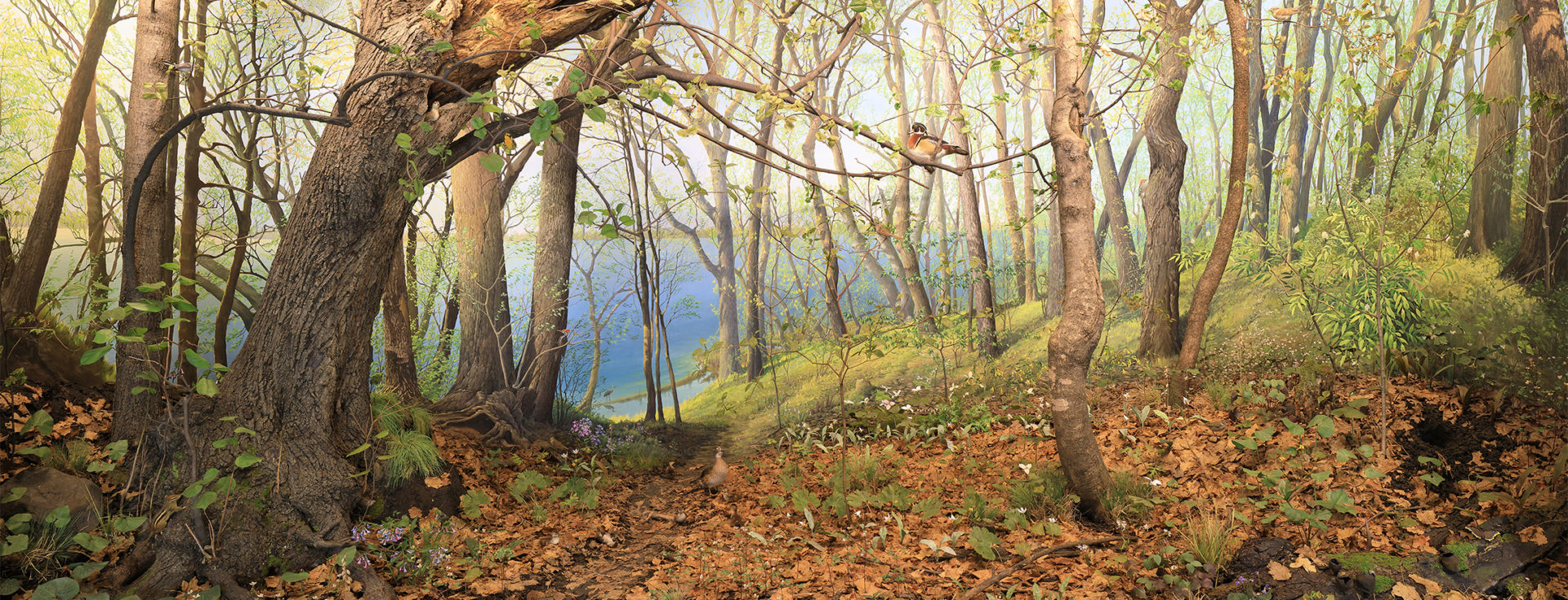 a forest scene from the big woods diorama