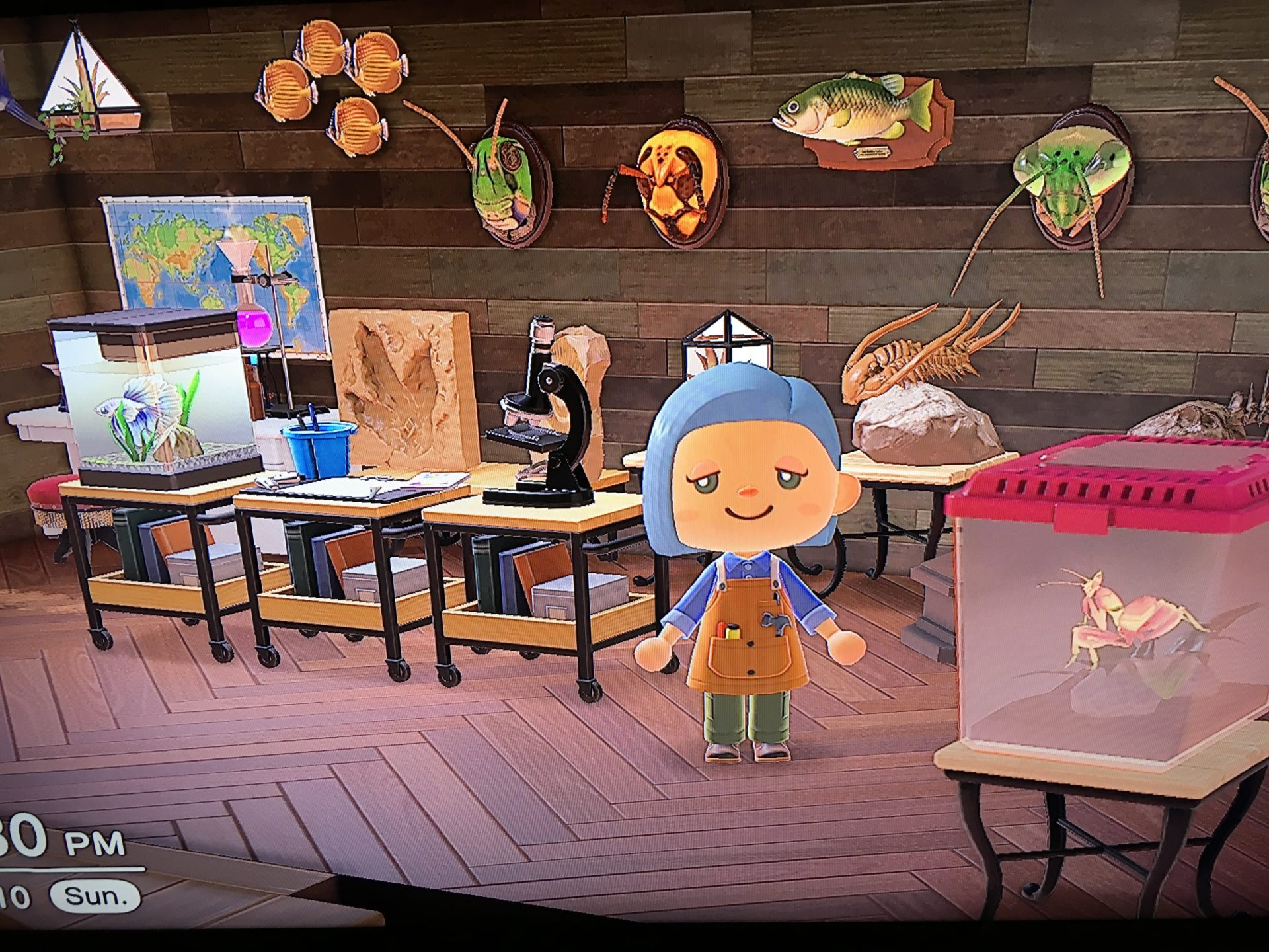 an animal crossing avatar at a house full of museum artifacts, including bugs, fish, and fossils