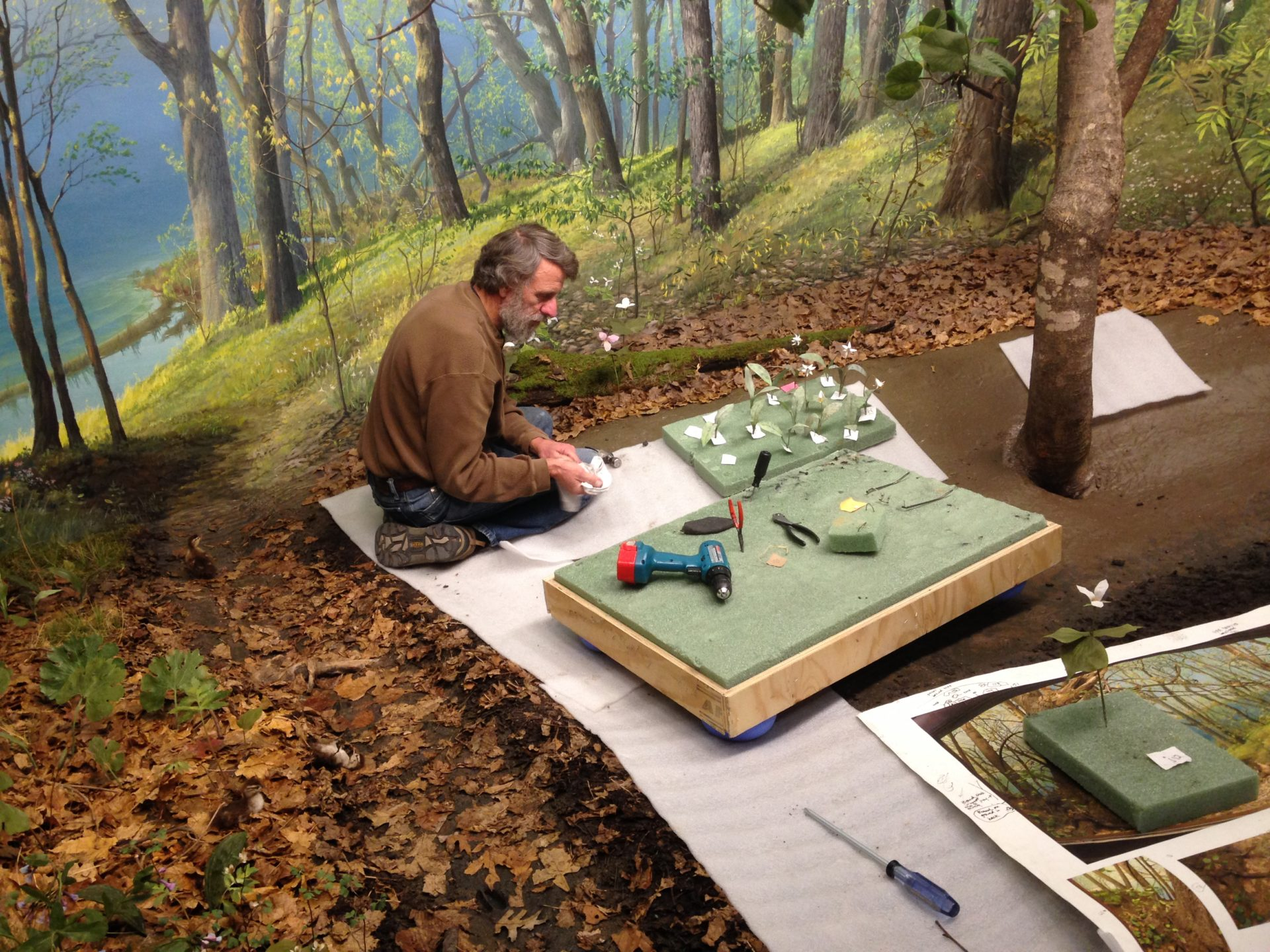 an artist meticulously labels foliage for the diorama restoration
