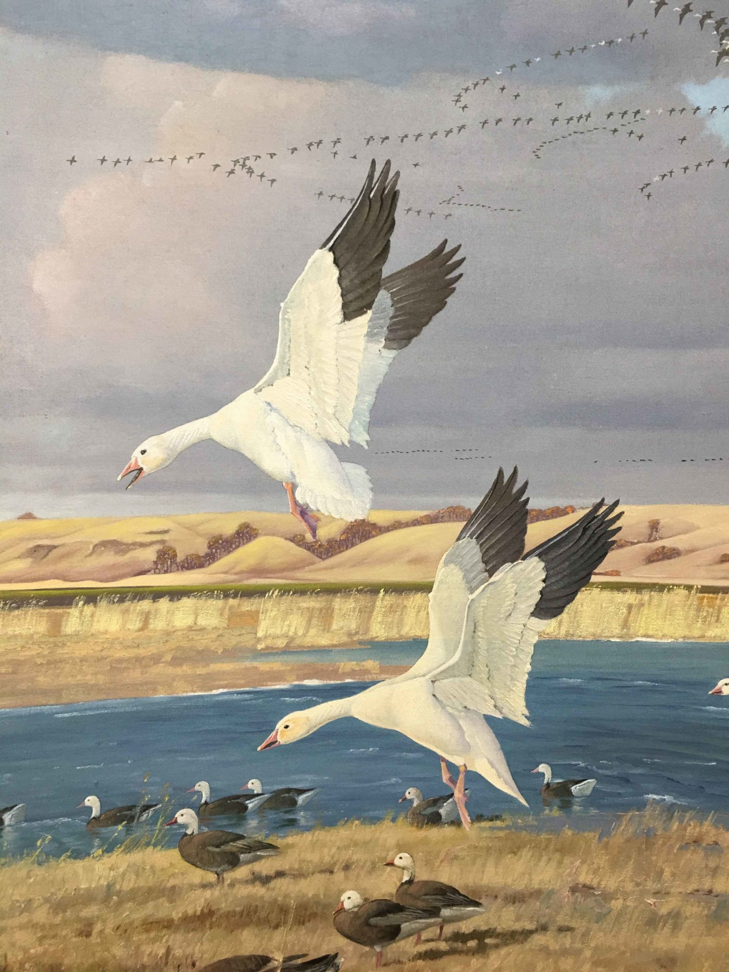 Closeup of Francis Lee Jaques painting of geese at Lake Traverse, showing 2 geese landing on the lake