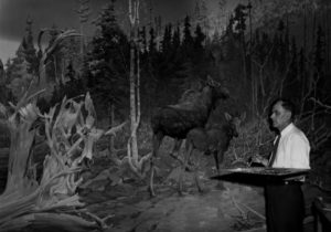 Artist Francis Lee Jaques painting the moose backdrop in the 1940s