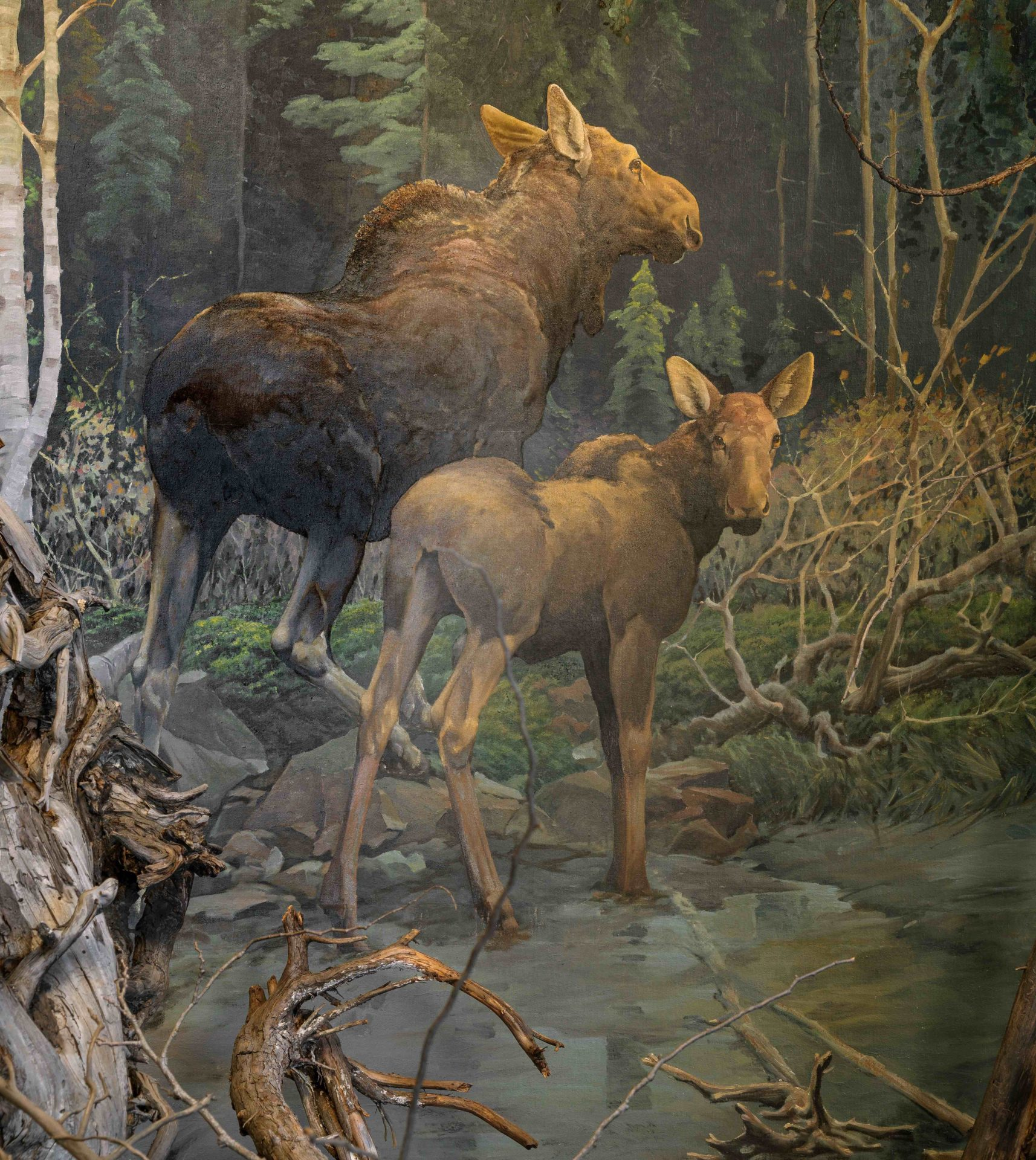 Francis Lee Jaques background painting of mother and calf moose