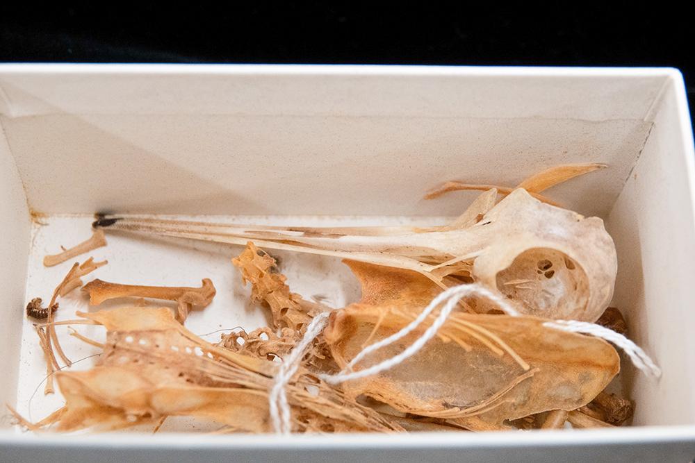 Box of bird bones