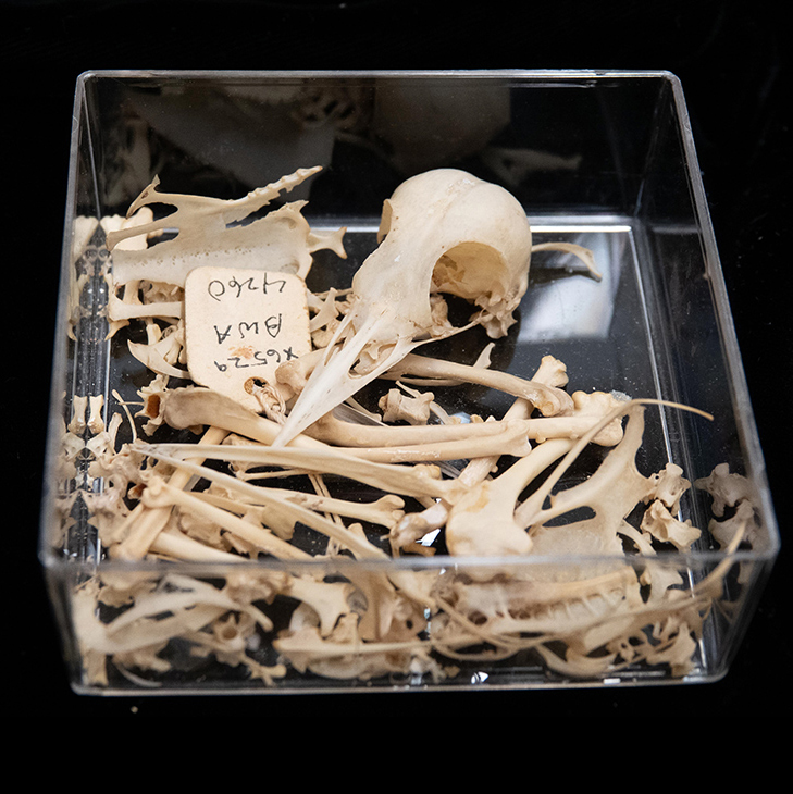 Collection of bird bones in a clear box
