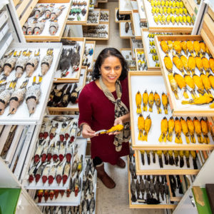Woman in scientific collection of birds