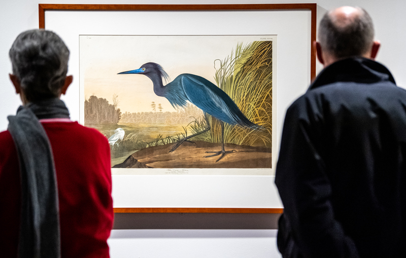 two people looking at a framed bird painting