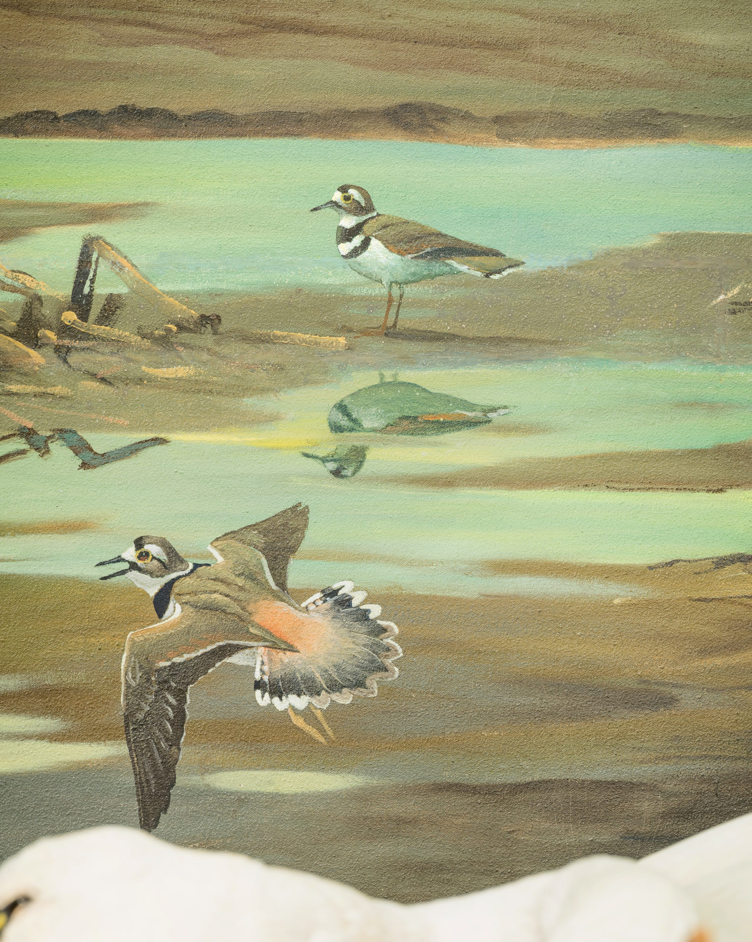killdeer flying and standing