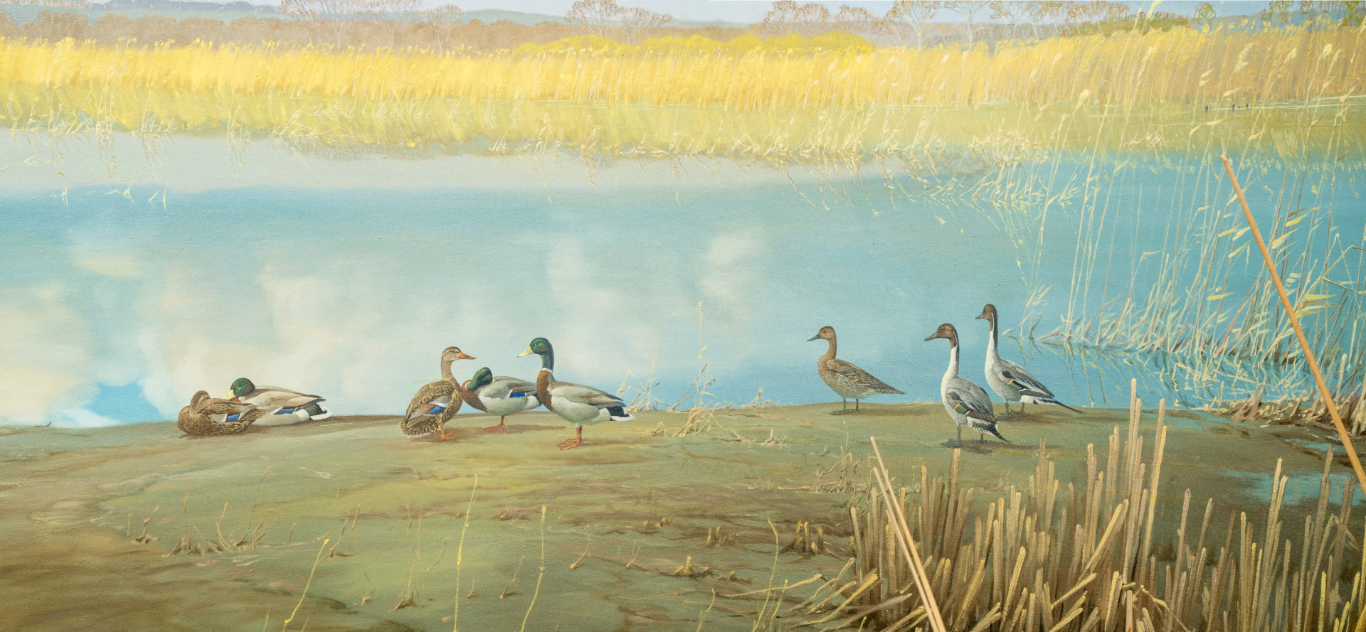a duck conventions