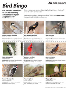 A bingo card with squares for individual birds