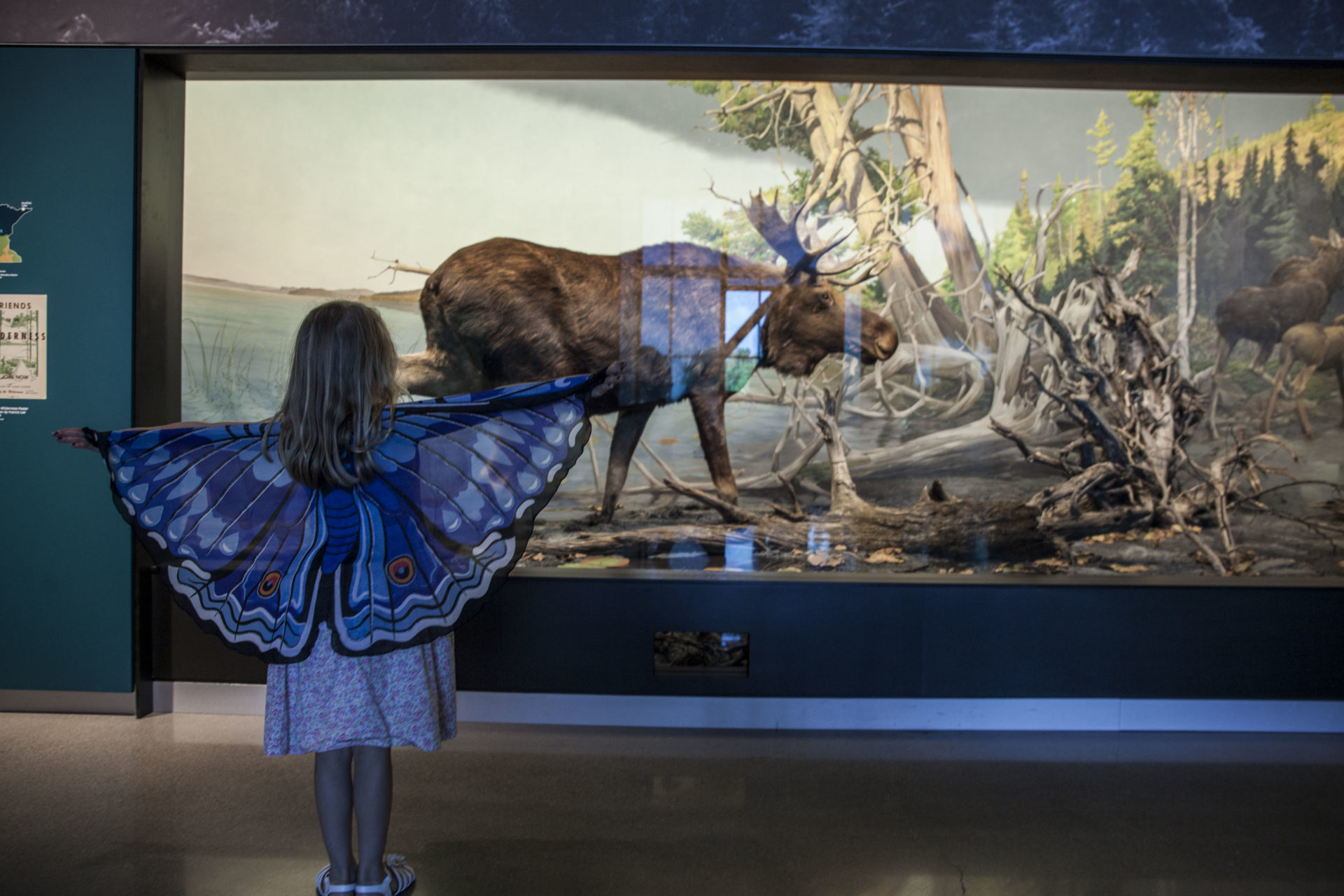 girl wearing butterfly wings looks at wildlife diorama