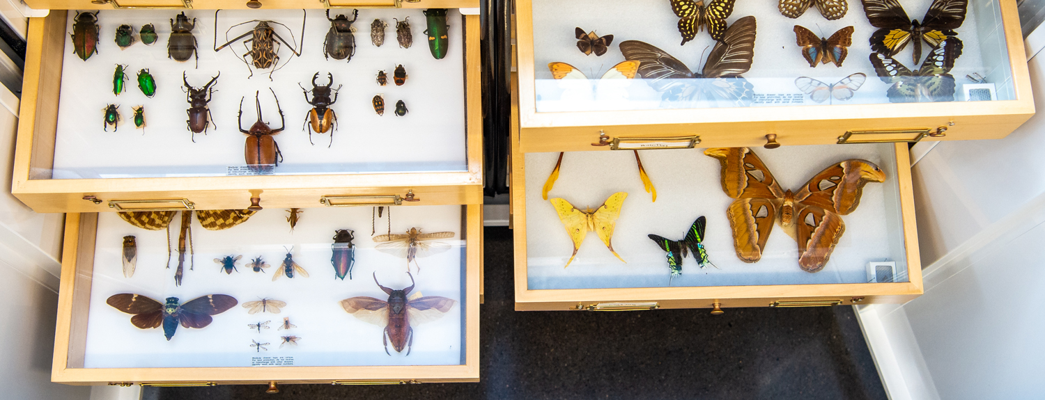 Drawers with collections of insects