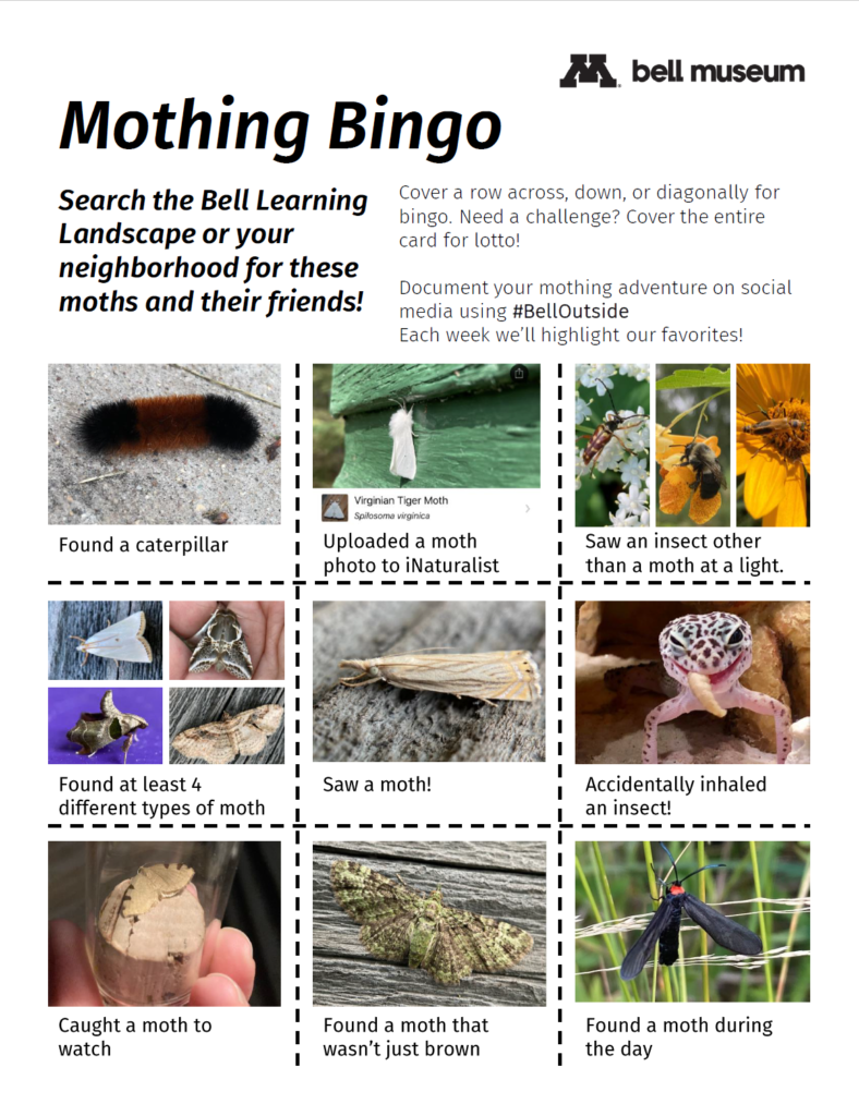Mothing bingo, includes 9 squares with activities: 1) found a caterpillar, 2) uploaded a moth photo to iNaturalist 3) saw an insect other than a moth at a light 4. found at least 4 different types of moth 5. saw a moth 6. accidentally inhaled an insect 7. caught an insect for observtion 8. found an insect that wasn't only brown 9. found a moth during the day