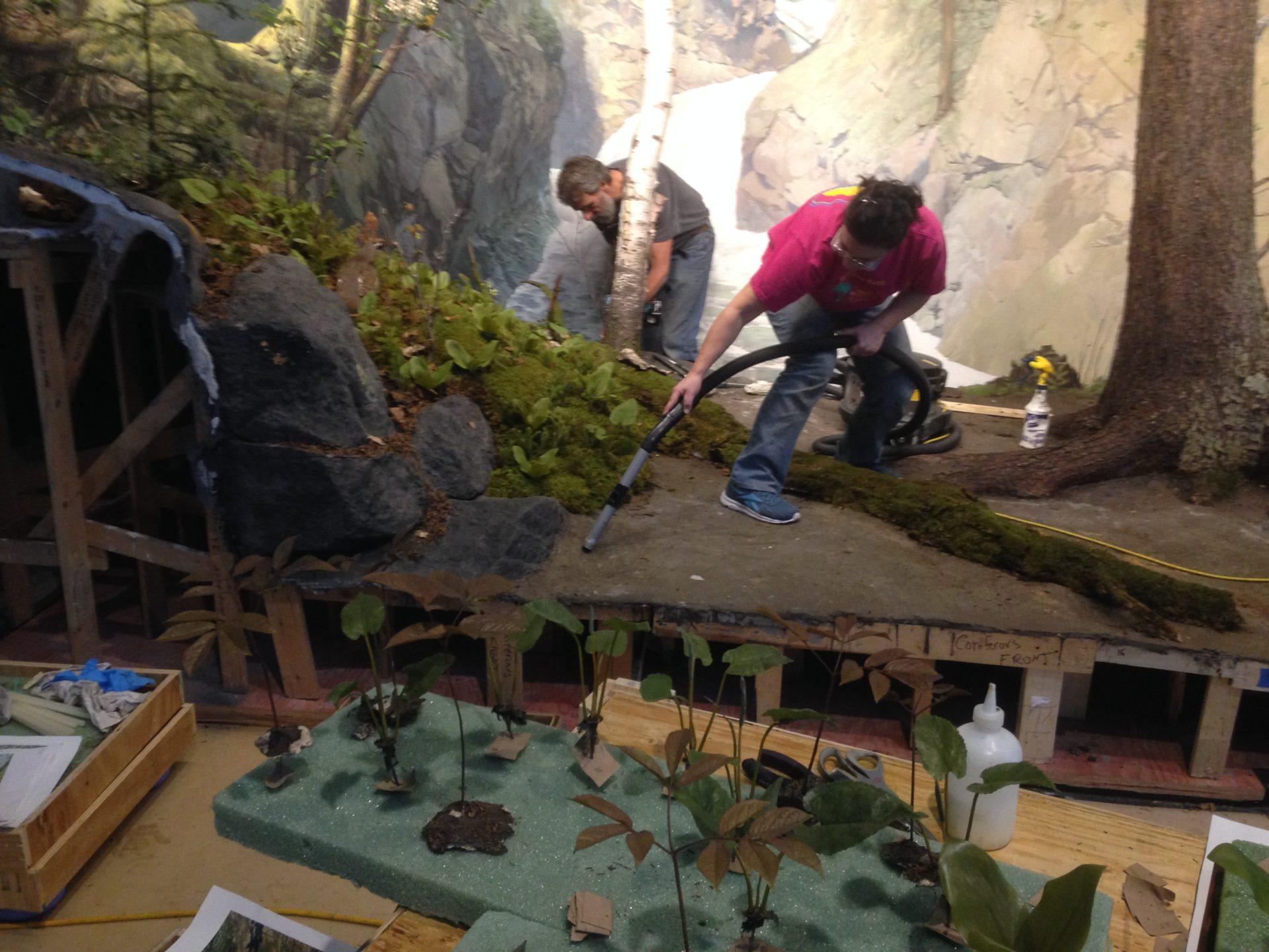 crews carefully deconstruct the diorama