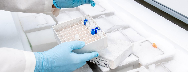 gloved hands handling frozen DNA samples