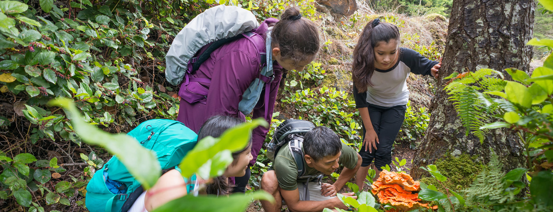 An extended family of hikers with backpacks stop to look at an edible mushroom (Laetiporus Cincinnatus, commonly known as Chicken of the Woods) during a hike through a remote wilderness park