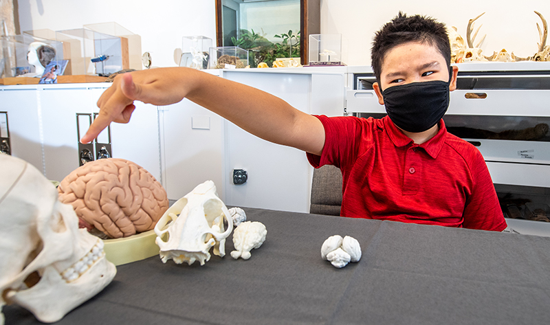 Boy in mask pointing at model brain