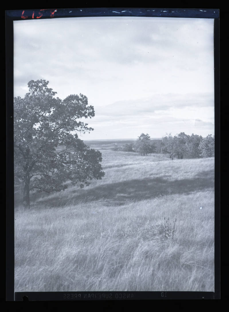 black and white photo of the tree and grasslands at inspiration point