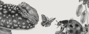 Sketch of toad, butterfly, ladybug