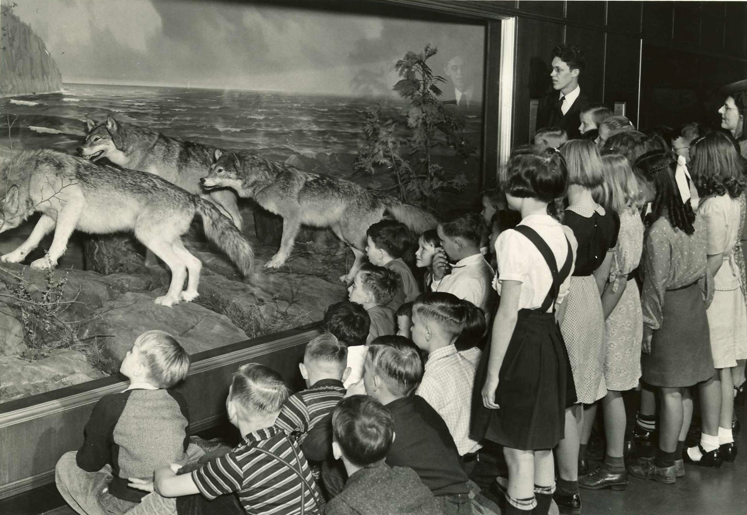 school group looks intently at the wolves diorama in a black and white photo