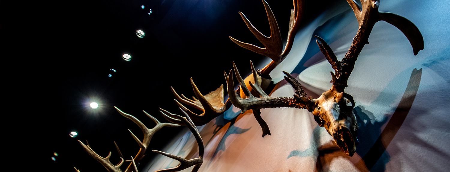 Wall of antlers with moody shadows