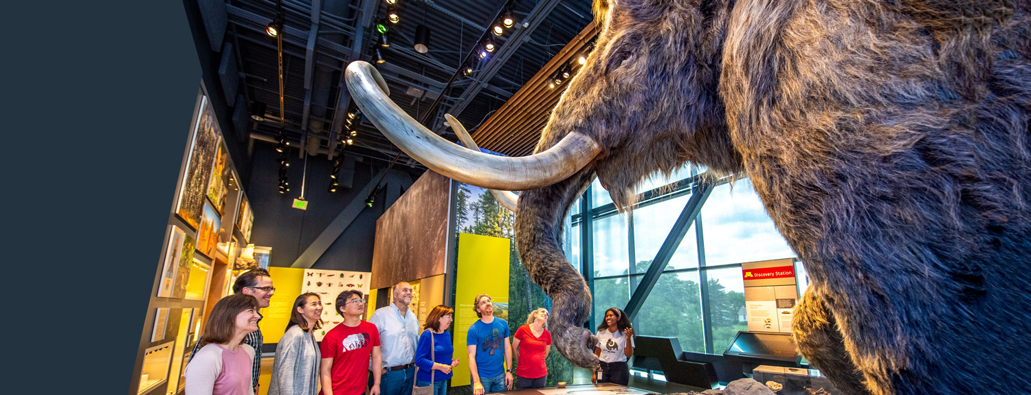 Visitors seeing the Bell's mammoth