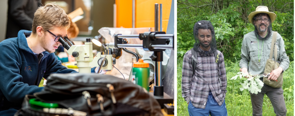two photos: one of a student researcher looking through a microscope. The other of George Weiblen and a researcher in the field