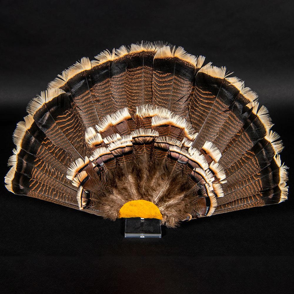 turkey tailfeathers