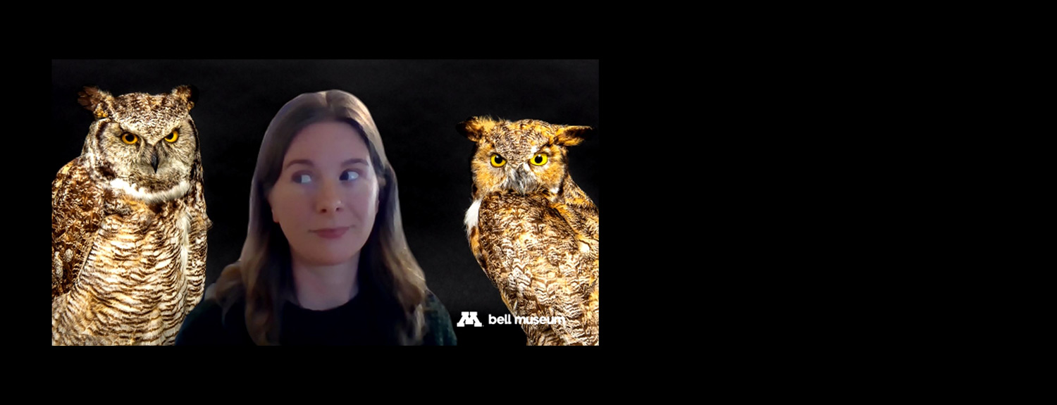 Woman on Zoom background with two owls