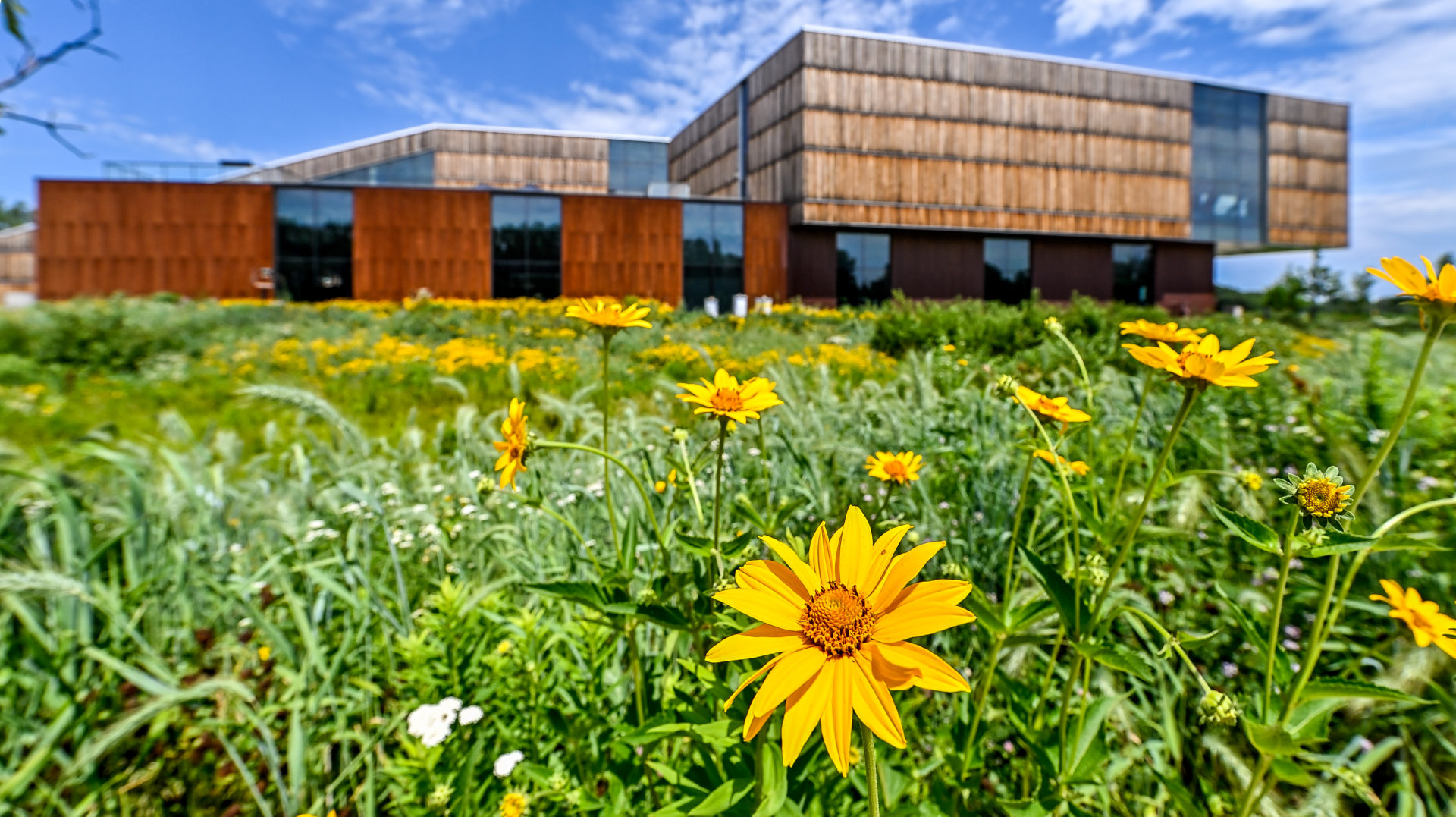 exterior summer image of the Bell Museum and its learning landscape