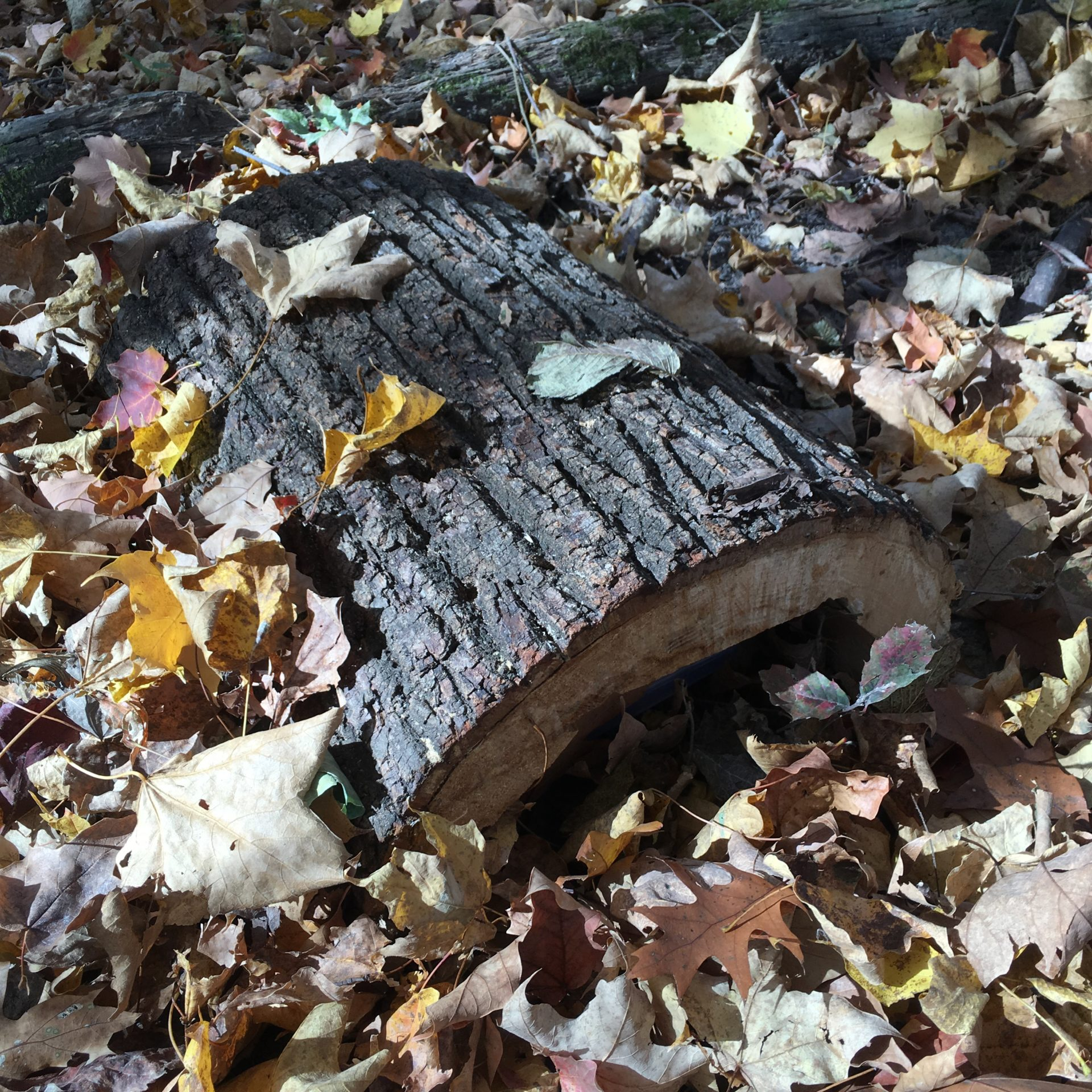 A log from a basswood tree that Winkler hollowed out to hide a cache at the Seven Mile Creek County Park