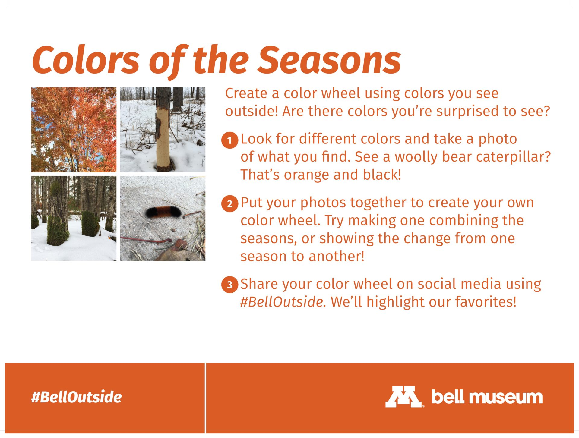 Colors of the Seasons. Create a color wheel using colors you see outside! Are there colors you're surprised to see?