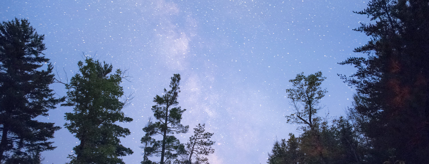 Evening sky with Milky Way over tree silhouettes
