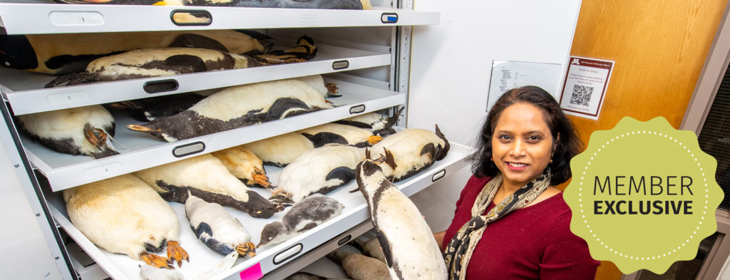 """Sushma in bird collection, """"Member exclusive"""""""