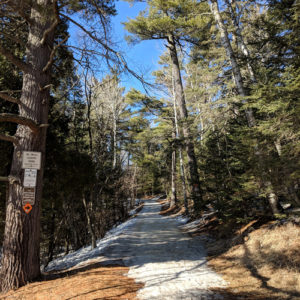 Wintertime trail in the woods