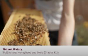 Bell Museum beekeeper using demo hive
