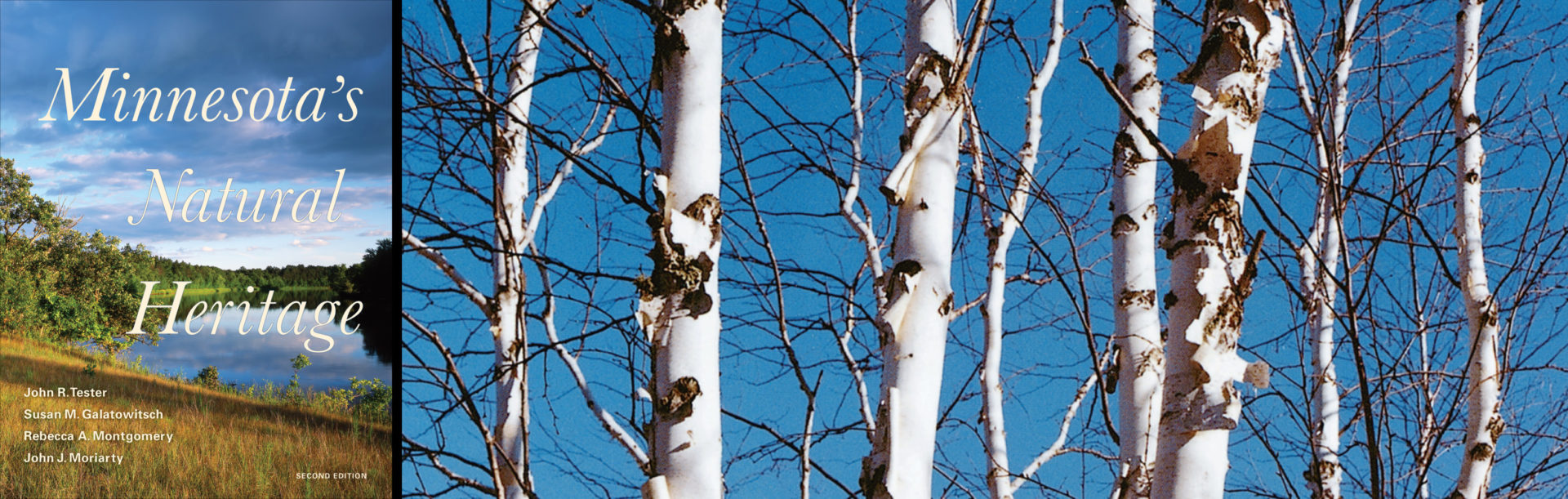 Minnesota's Natural Heritage, Second Edition Book Cover with birch trees