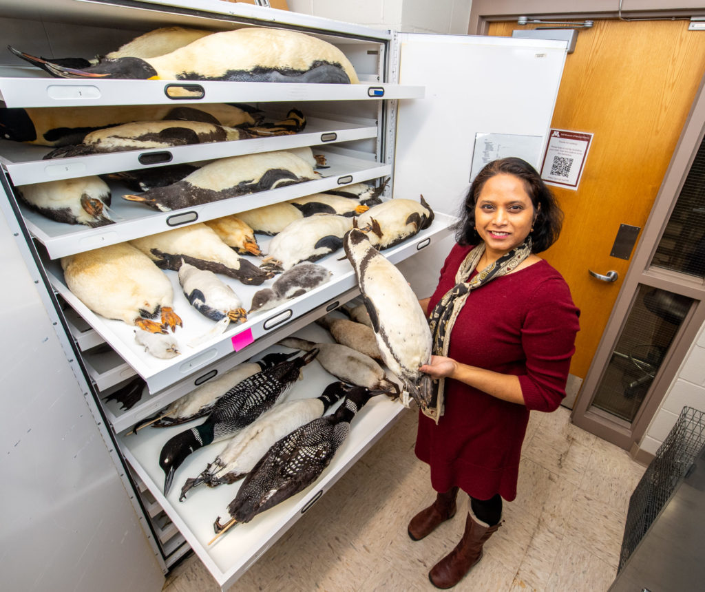 Dr. Sushma Reddy with penguin specimens
