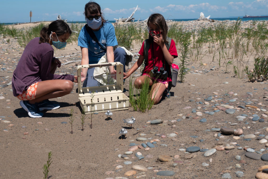 Two girls helping 1 adult release Piping Plover chicks