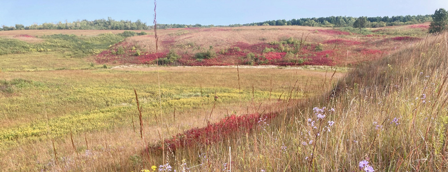 view of lost valley prairie's colors