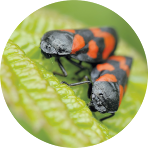 two insects on a leaf