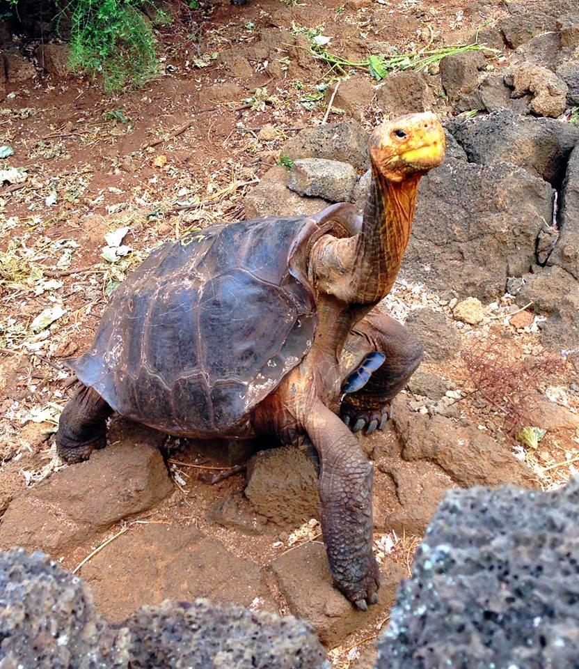 A turtle among rocks