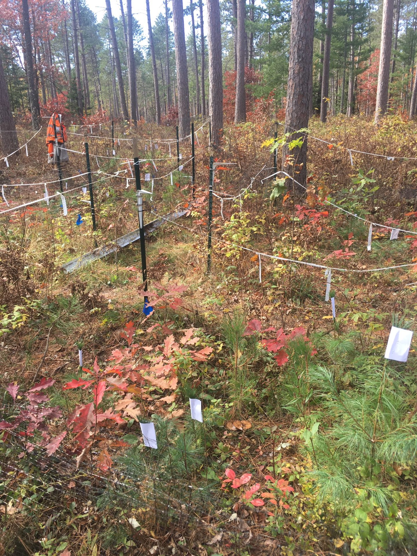 Tied off research plots in a forest