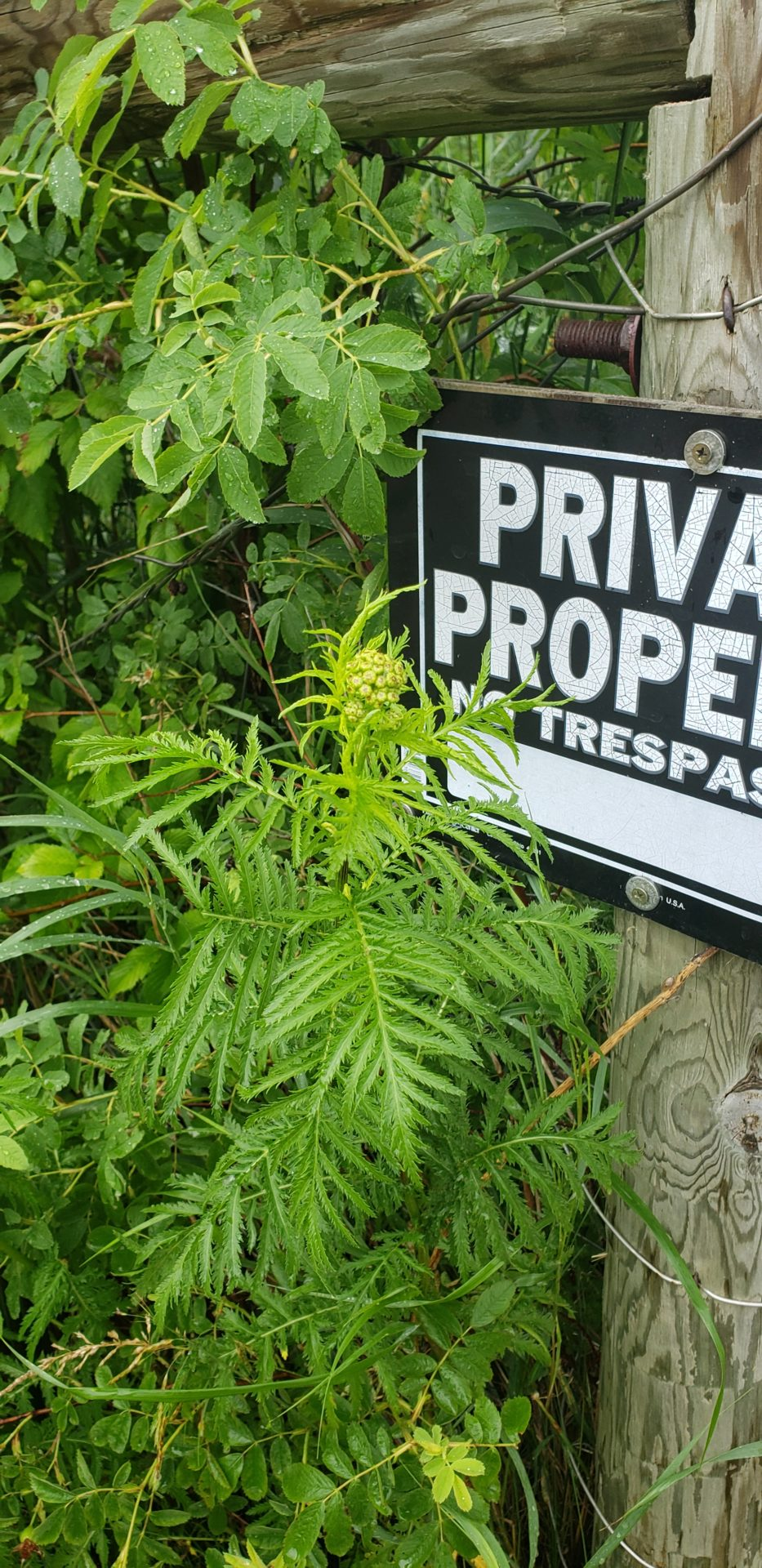 Plant next to private property sign