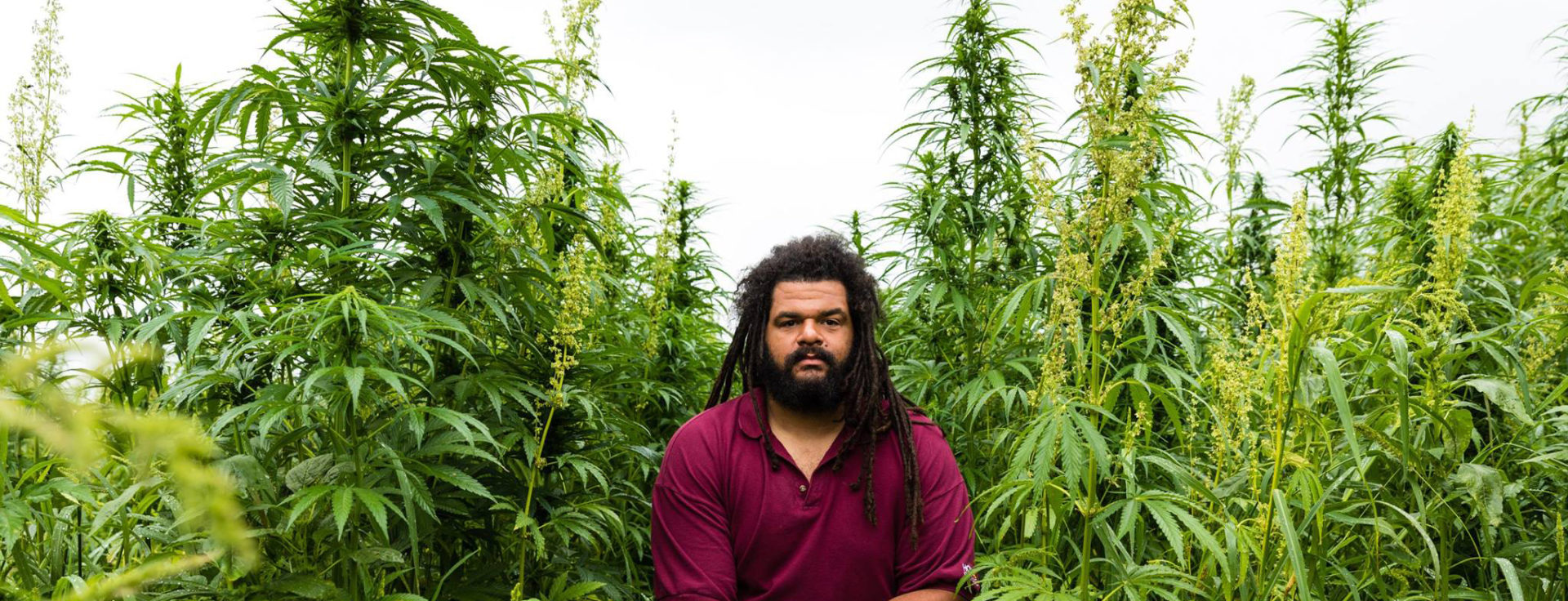 Man surrounded by cannabis plants