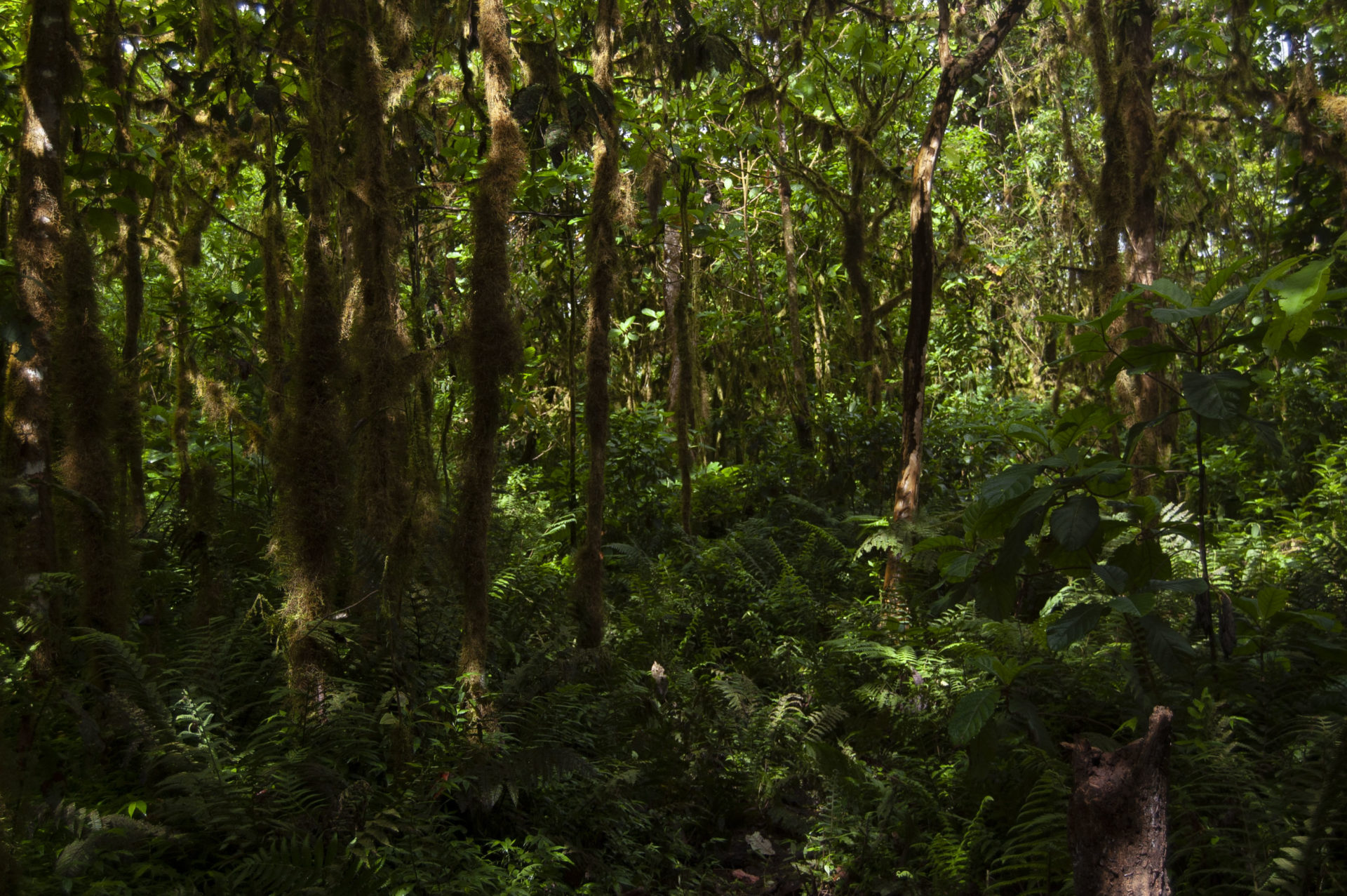 Forest in Galapagos Islands