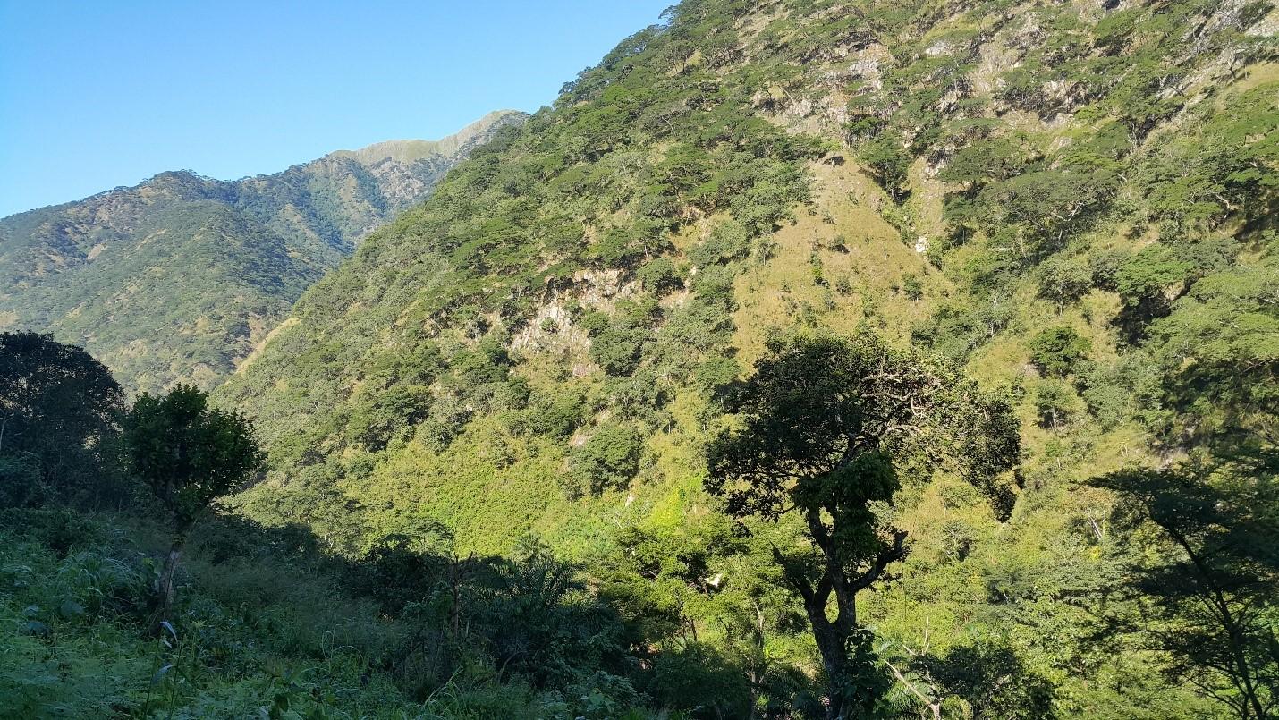 Grassy mountain side