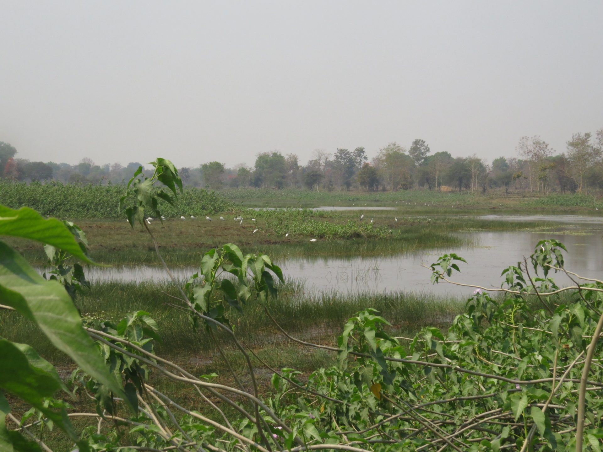 Gondia landscape with body of water