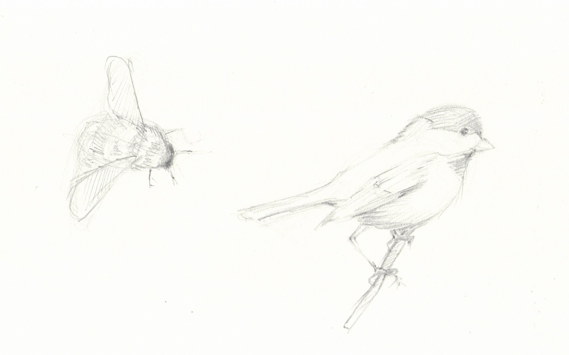 Drawing of a bee and a bird