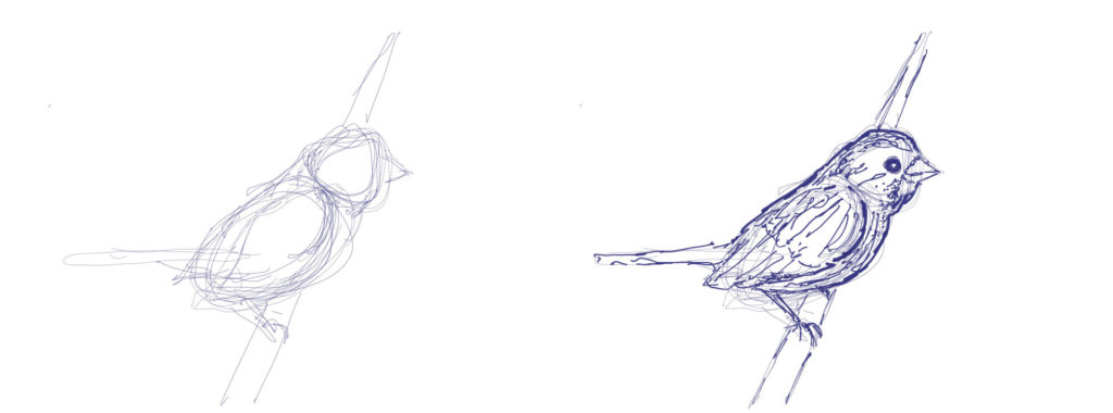 Gesture sketch of a bird